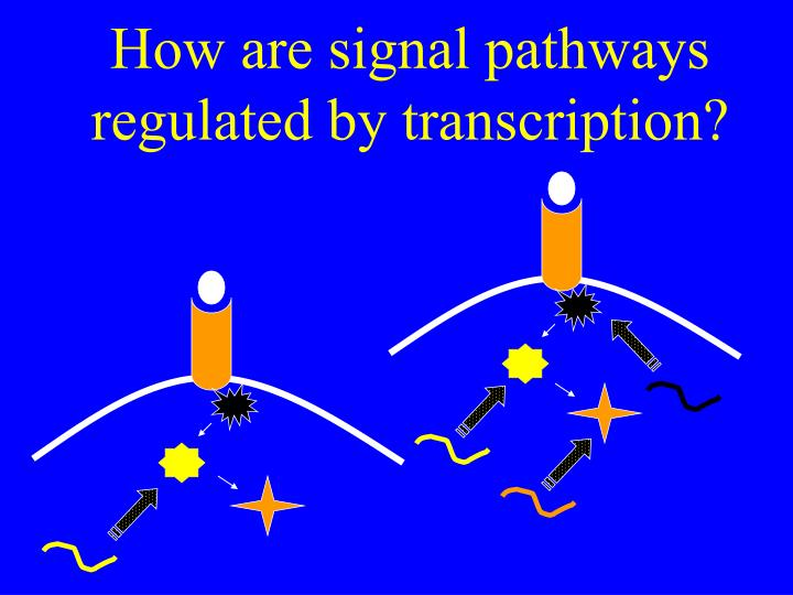How are signal pathways