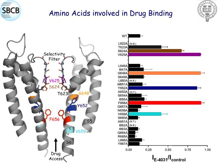Amino Acids involved in Drug Binding