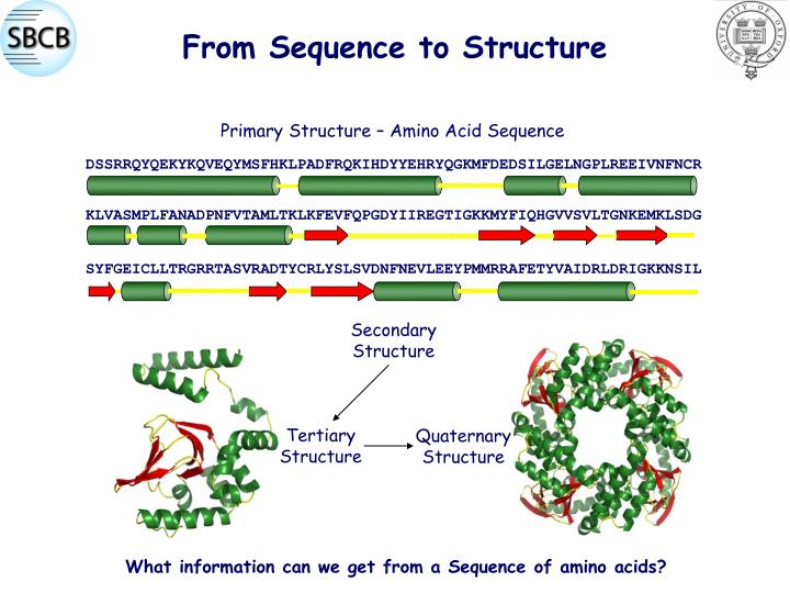 From Sequence to Structure