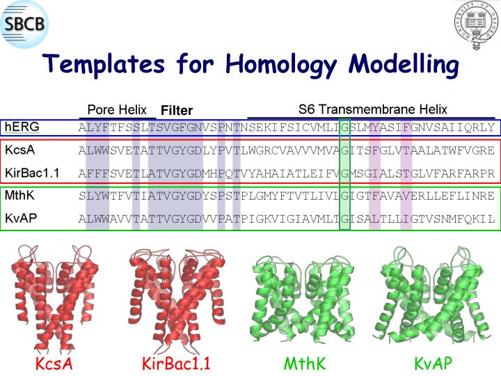 Templates for Homology Modelling