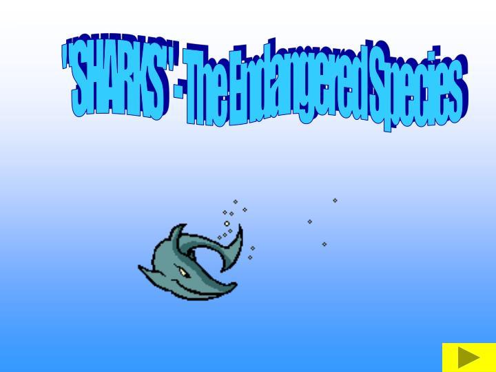 """""""SHARKS"""" - The Endangered Species"""