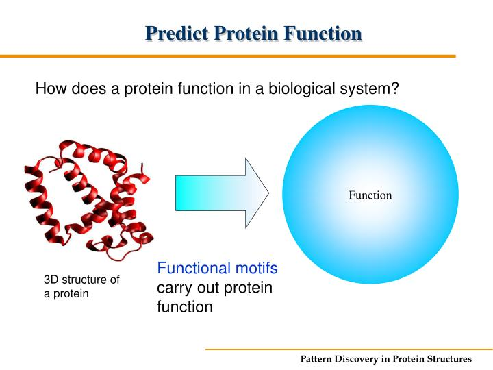 Predict Protein Function