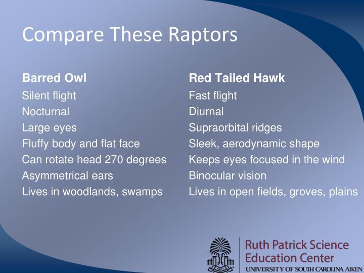 Compare These Raptors