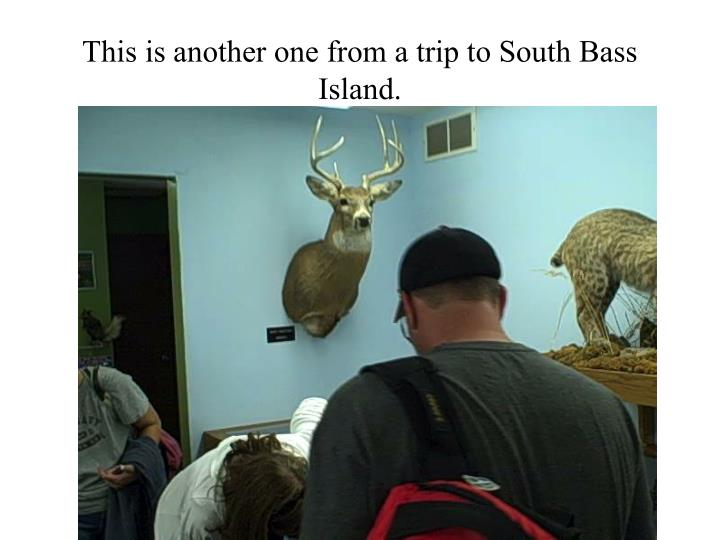 This is another one from a trip to South Bass Island.