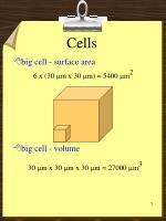 cells6
