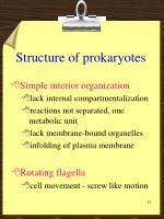 structure of prokaryotes1