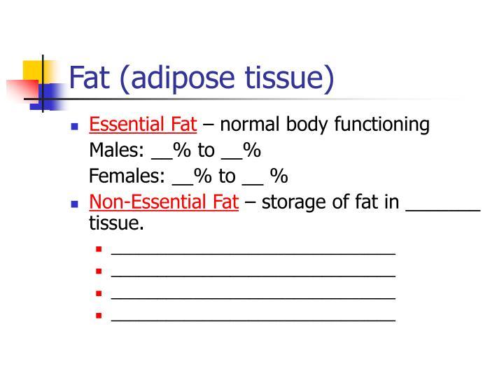 Fat adipose tissue
