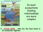 in most ecosystems feeding relationships are more complex