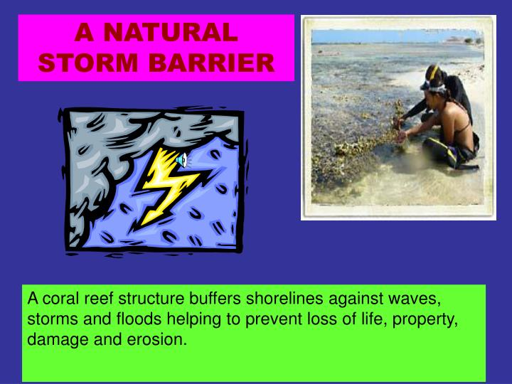 A NATURAL STORM BARRIER