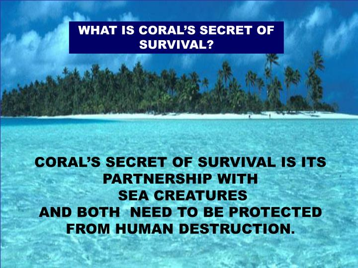 WHAT IS CORAL'S SECRET OF SURVIVAL?