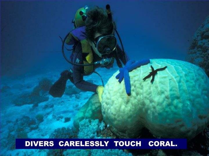 DIVERS  CARELESSLY  TOUCH   CORAL.