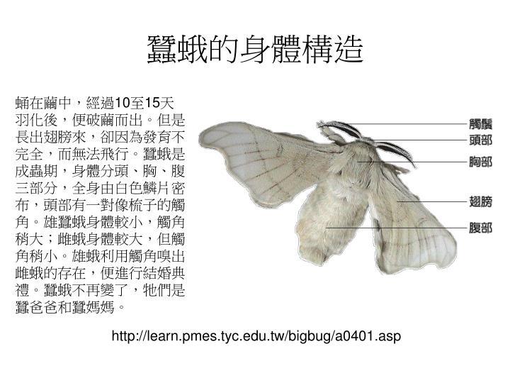 蠶蛾的身體構造
