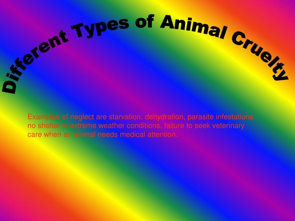 PPT - Animal Cruelty PowerPoint Presentation - ID:3525569