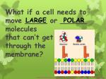 what if a cell needs to move or molecules that can t get through the membrane