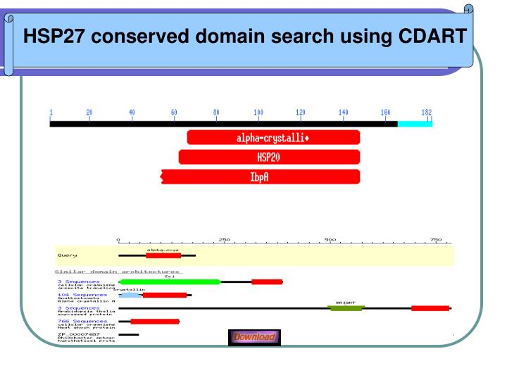 HSP27 conserved domain search using CDART