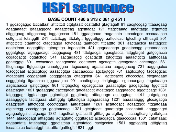 HSF1 sequence