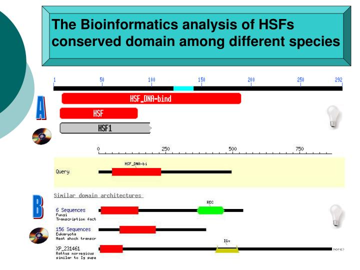 The Bioinformatics analysis of HSFs conserved domain among different species