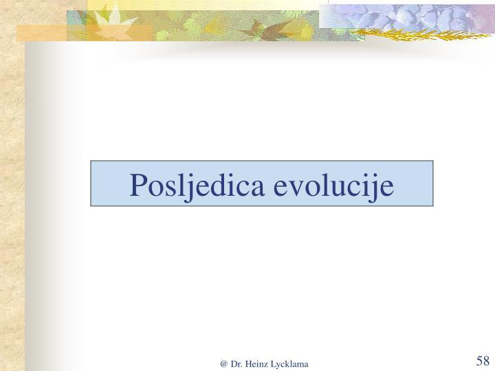 Posljedica evolucije