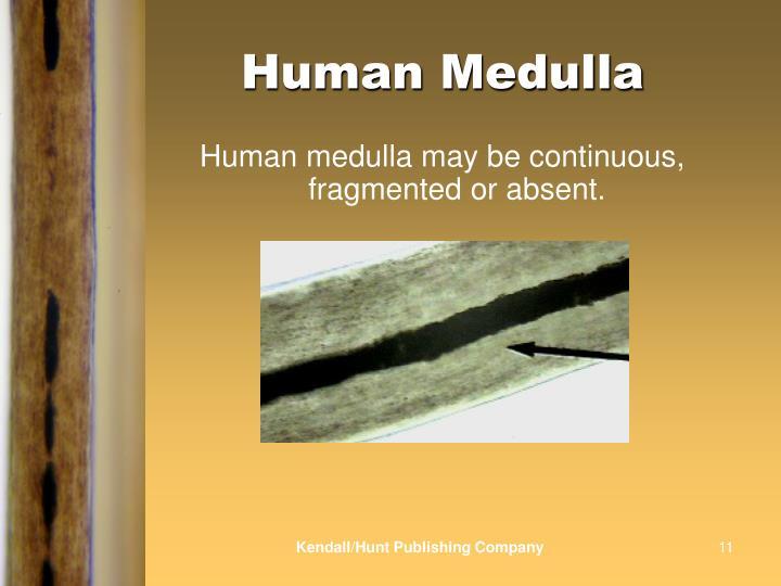 Human Medulla