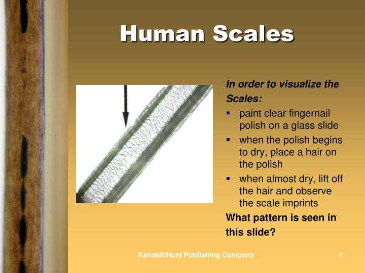 Human Scales