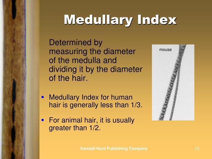 Medullary Index