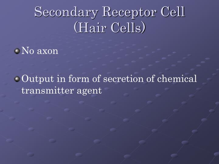 secondary receptor cell hair cells n.