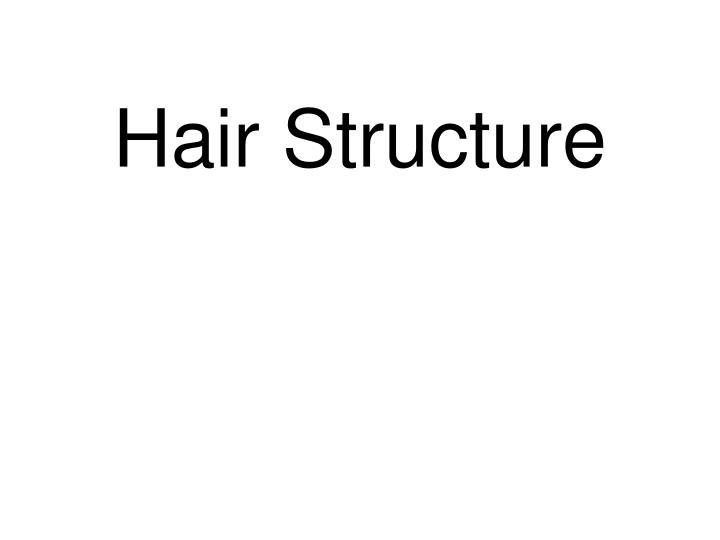 hair structure n.