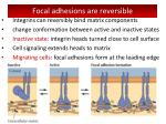 focal adhesions are reversible