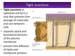 tight junctions1