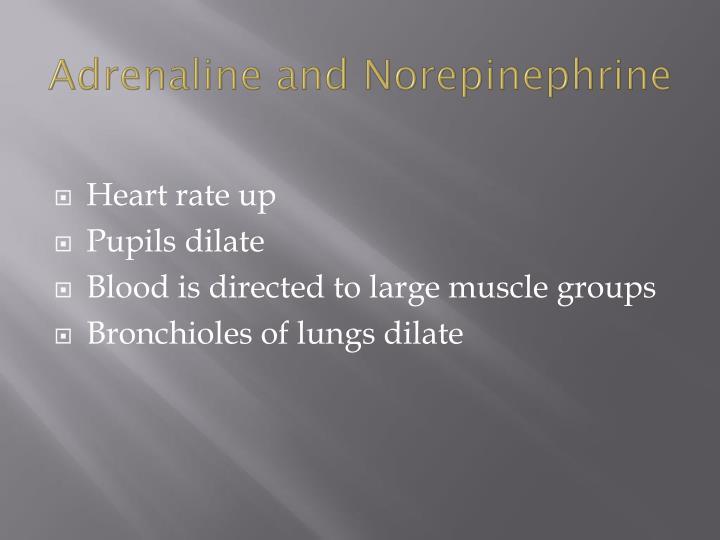 Adrenaline and Norepinephrine