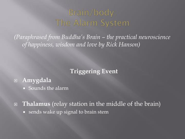 Brain/body: