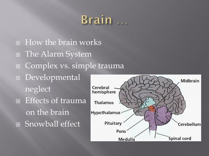 Brain …