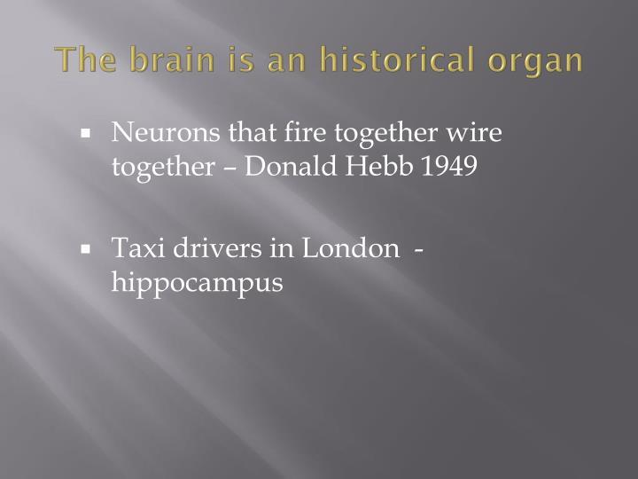 The brain is an historical organ