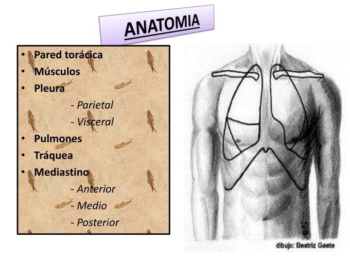 PPT - TRAUMA DE TORAX PowerPoint Presentation - ID:3534641