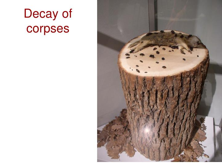 Decay of corpses