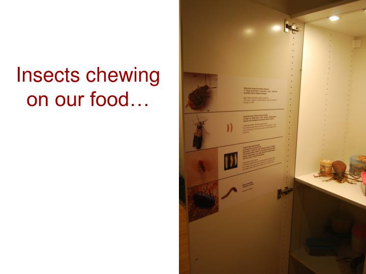 Insects chewing on our food…