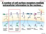 a number of cell surface receptors mediate extracellular information to the nucleus