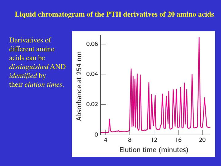 Liquid chromatogram of the PTH derivatives of 20 amino acids