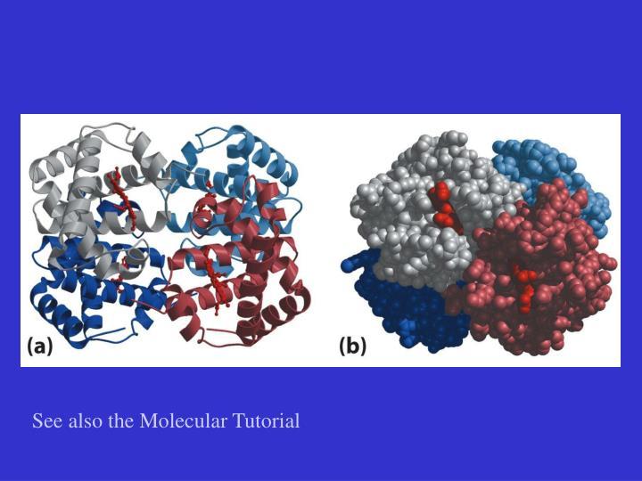 See also the Molecular Tutorial
