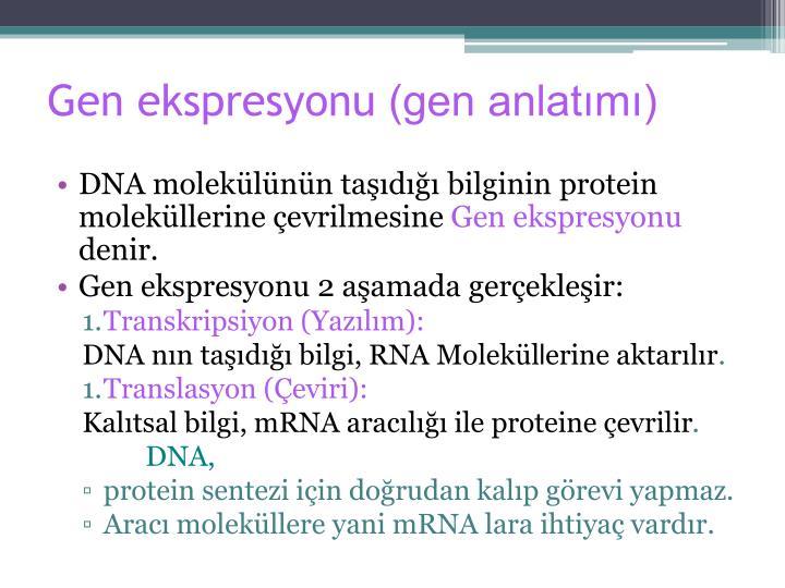 Gen ekspresyonu gen anlat m
