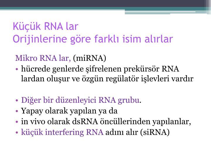 Küçük RNA lar