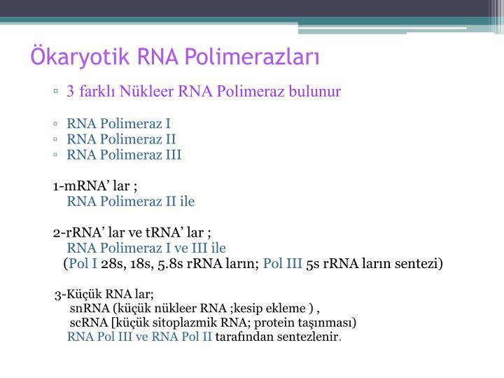 Ökaryotik RNA Polimerazları