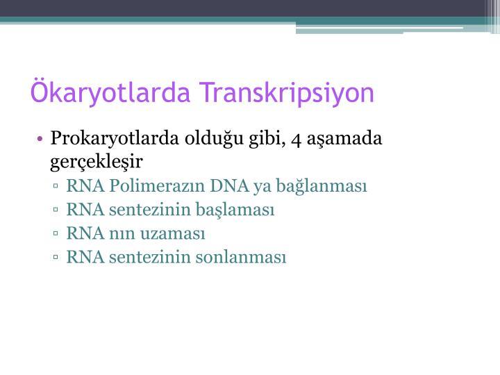 Ökaryotlarda Transkripsiyon