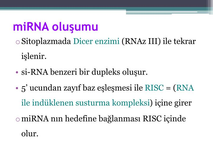 miRNA oluşumu