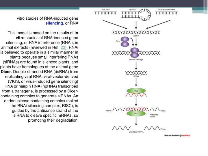vitro studies of RNA-induced gene