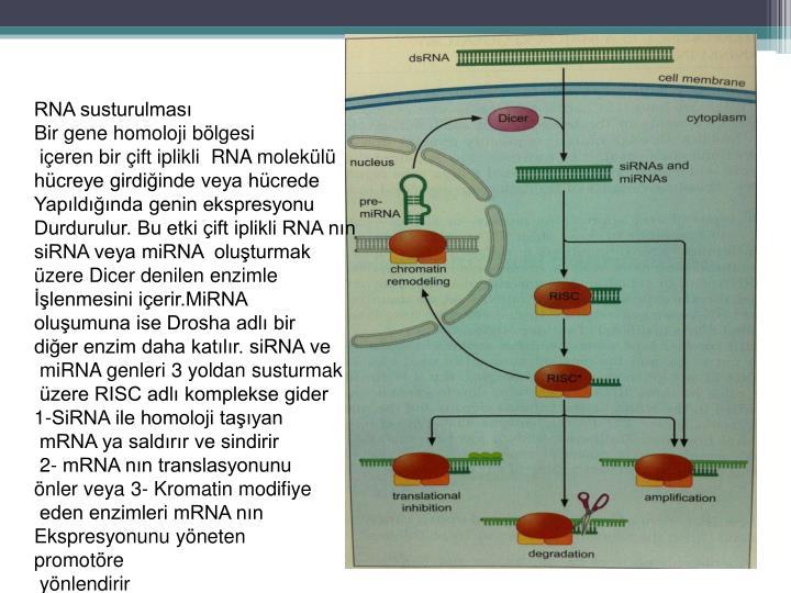 RNA susturulması