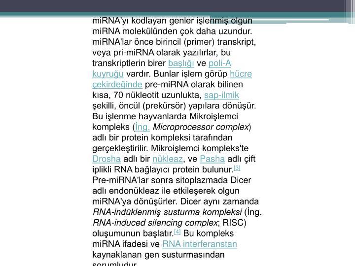 miRNA'yı kodlayan genler işlenmiş olgun miRNA molekülünden çok daha uzundur. miRNA'lar önce birincil (primer) transkript, veya pri-miRNA olarak yazılırlar, bu transkriptlerin birer