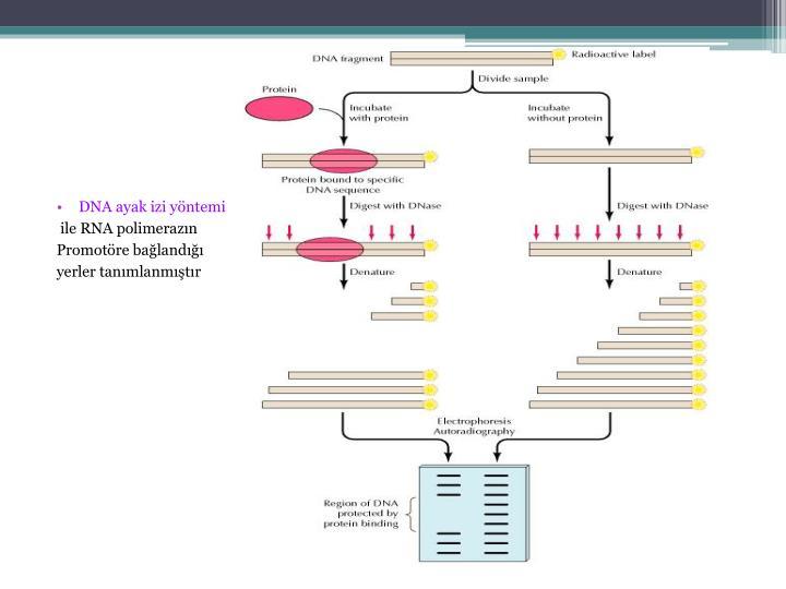 DNA ayak izi yöntemi