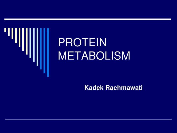 protein metabolism n.