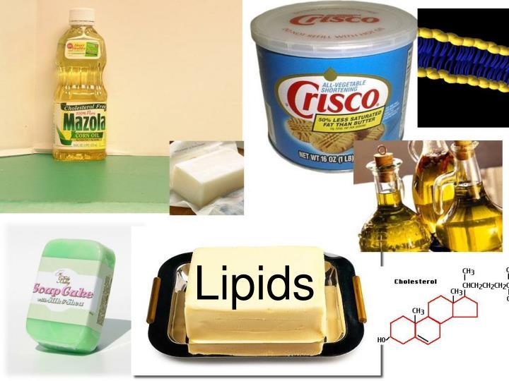 lipids n.